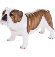 British Bulldog, Brindle
